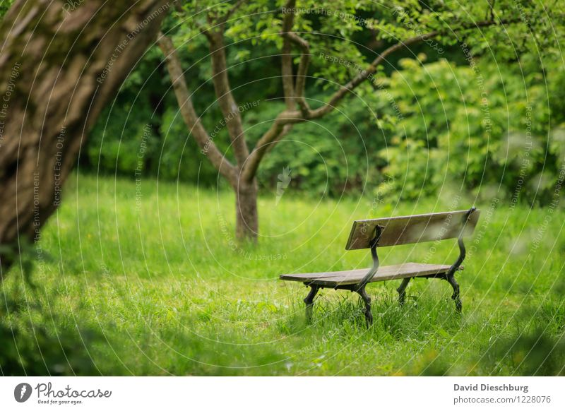 REST II Relaxation Calm Meditation Fragrance Leisure and hobbies Vacation & Travel Nature Plant Animal Spring Summer Beautiful weather Tree Grass Garden Park