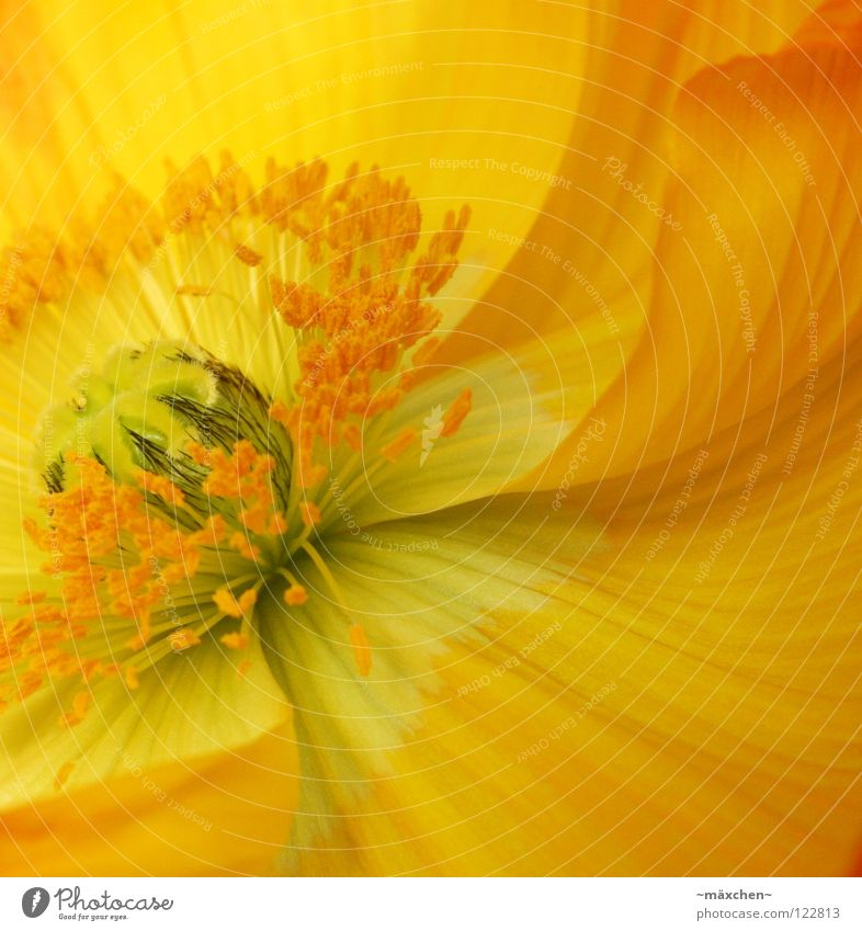 Plant Green Summer Flower Calm Black Yellow Blossom Spring Background picture Line Bright Orange Blossoming Bouquet Stalk