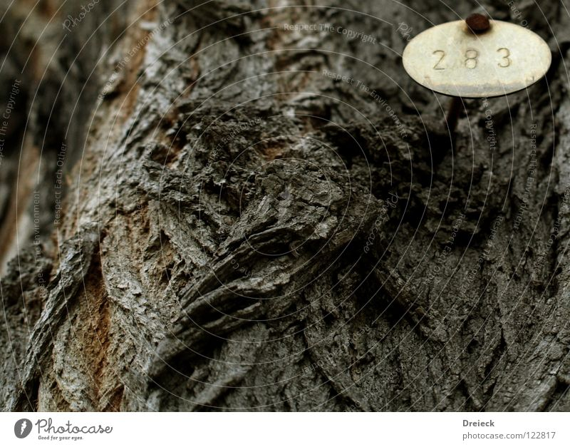 Nature Old Tree Landscape Wood Sand Garden Park Brown Earth Signs and labeling Digits and numbers Branch Tree trunk Treetop