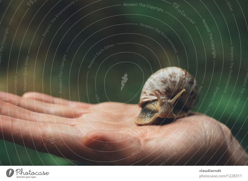 hand cajoler Human being Masculine Hand Environment Nature Animal Wild animal Snail Vineyard snail 1 Movement Disgust Slimy Environmental pollution Crawl