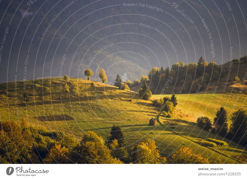 September light Nature Landscape Air Sun Sunrise Sunset Sunlight Autumn Tree Grass Bushes Moss Meadow Field Forest Hill Mountain Carpathians Moody Serene