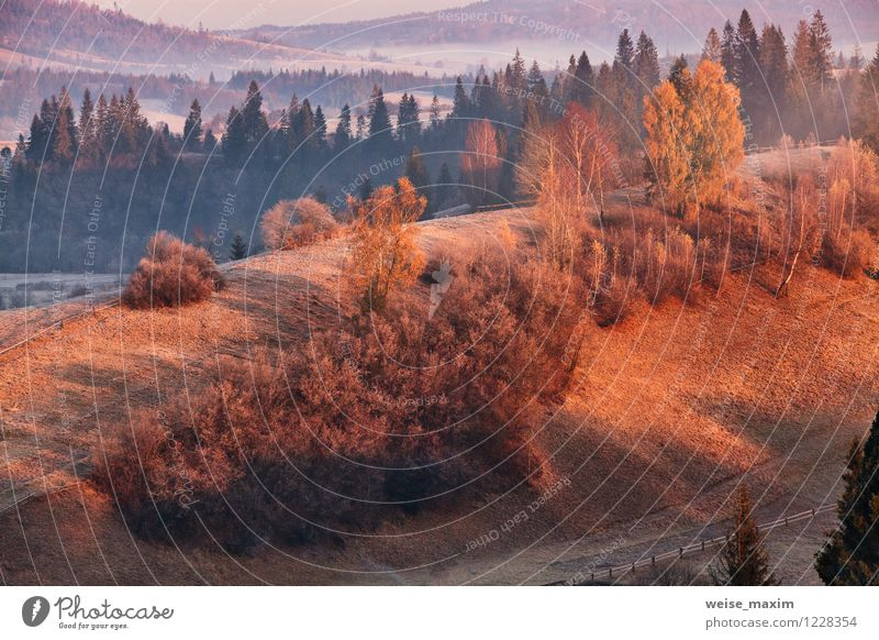 november morning in carpathian Nature Landscape Sand Air Water Sky Clouds Sunlight Autumn Weather Fog Tree Grass Bushes Leaf Meadow Field Forest Hill Rock