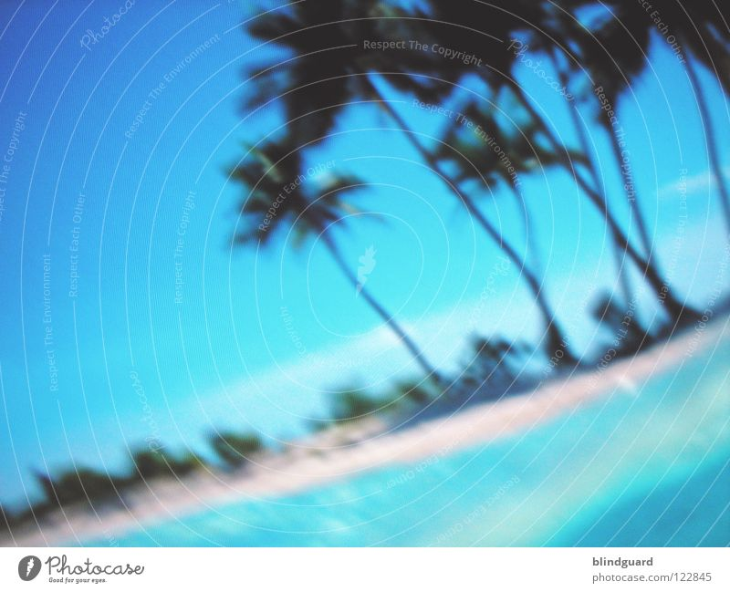 Digital Paradise Screen Palm tree Pixel Blur RGB Red Green LCD Vacation & Travel Screensaver Sky Macro (Extreme close-up) Close-up Electrical equipment