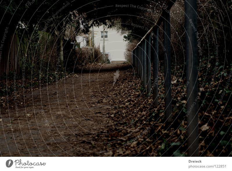 Leaf Calm Dark Lanes & trails Garden Park Going Fear Walking Beginning Perspective Target End Handrail Scream Tunnel