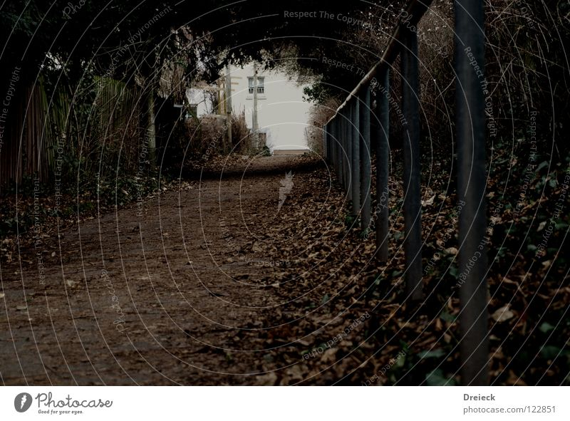 You go ahead... honey! Leaf Dark Light Calm Tunnel Tunnel vision Going Fear Panic Garden Park Lanes & trails Handrail Hollow Perspective End Beginning Target