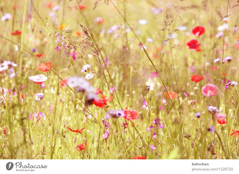 momomo(h)ntag Nature Plant Spring Summer Beautiful weather Flower Grass Leaf Blossom Poppy Garden Park Meadow Field Blossoming Fragrance Growth Fresh