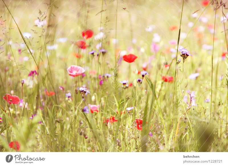mo(h)nday mo(h)(r)ning Nature Plant Spring Summer Beautiful weather Flower Grass Leaf Blossom Wild plant Poppy Garden Park Meadow Blossoming Fragrance Faded