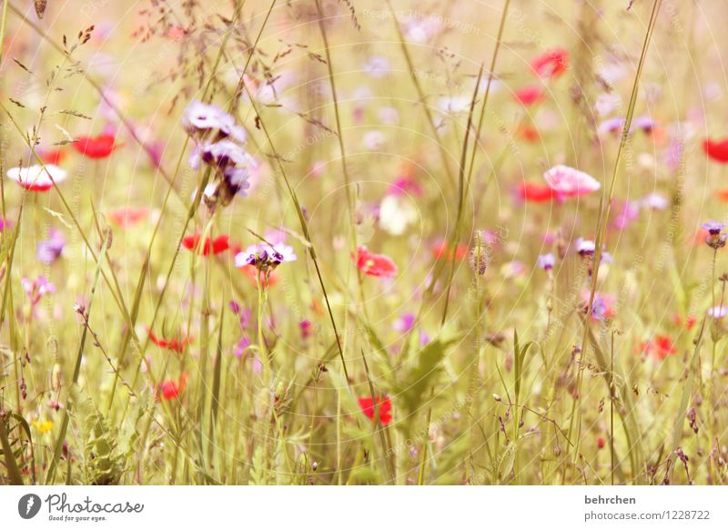 moin mo(h)ntag! Nature Plant Spring Summer Beautiful weather Flower Grass Leaf Blossom Wild plant Poppy Garden Park Meadow Blossoming Fragrance Faded Growth