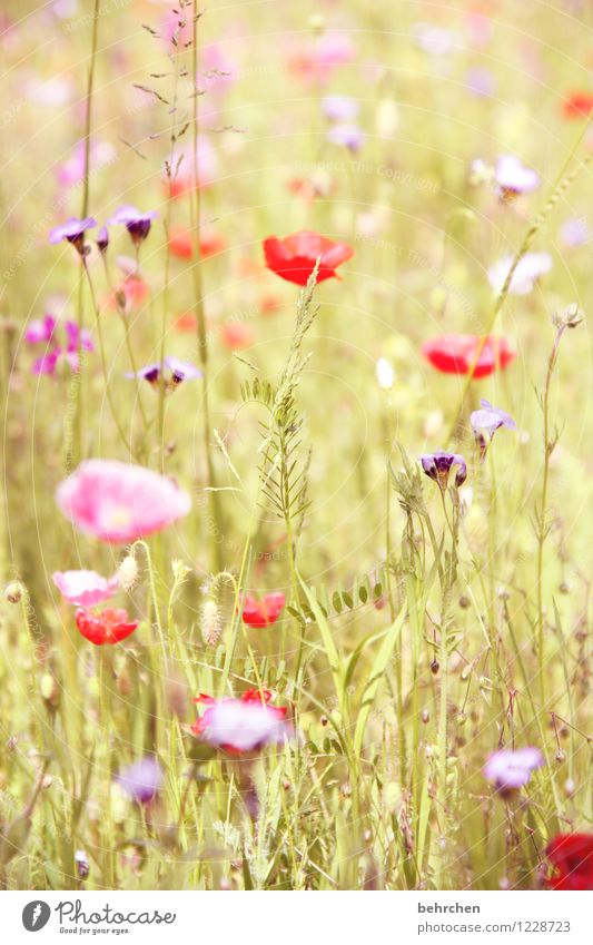 Nature Plant Green Beautiful Summer Flower Red Leaf Spring Blossom Meadow Grass Garden Pink Park Field