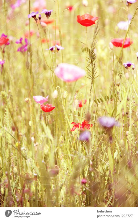 Nature Plant Beautiful Summer Flower Red Leaf Blossom Spring Meadow Grass Garden Pink Park Field Growth