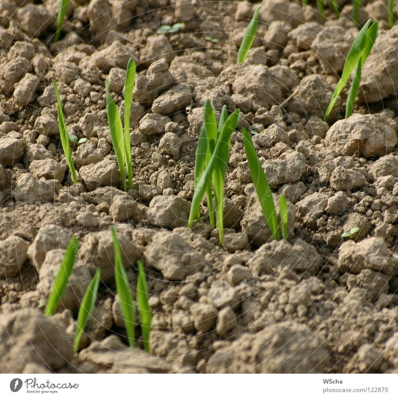 The seed is sown Sowing Green Field Agriculture Maturing time Spring Nature Earth Growth