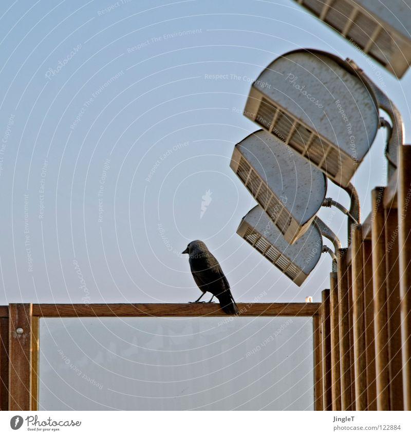 Sky Vacation & Travel Blue Relaxation Ocean Beach Black Warmth Coast Wood Bird Free Open Island Break Longing