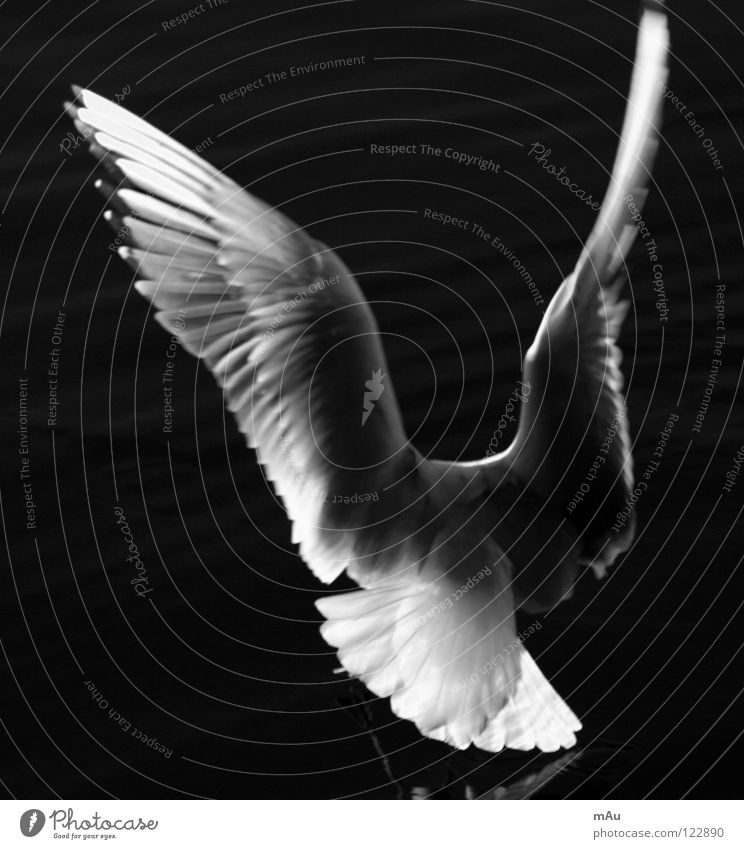 Y? Es un gaviota? Seagull Bird Lake Water Reflection Freedom Dynamics Black & white photo
