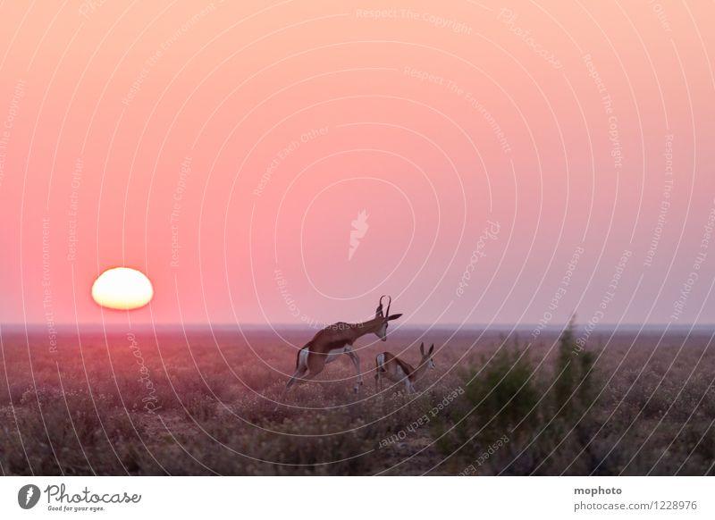 #3 Happy Couple Hunting Vacation & Travel Tourism Far-off places Safari Environment Nature Landscape Animal Sun Sunrise Sunset Drought Bushes Desert Steppe