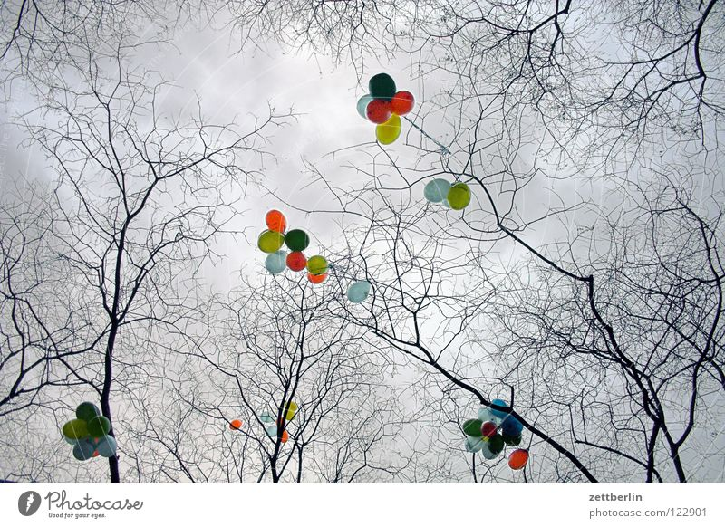 balloons Air Balloon Multicoloured Party Childrens birthsday Blow Go up Clouds Tree Jewellery Embellish Decoration Fiasco Handicapped Stop Border Dream Desire