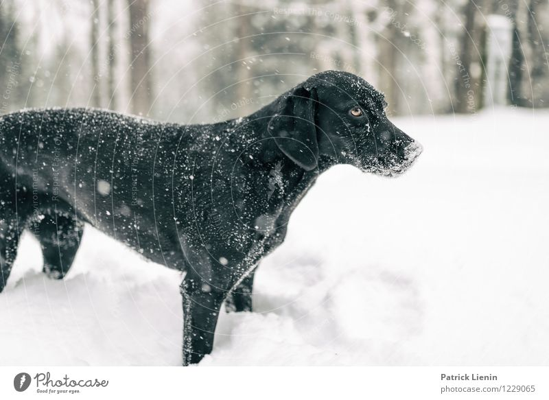 Dog Nature Relaxation Loneliness Landscape Animal Joy Winter Forest Environment Snow Freedom Snowfall Weather Contentment Leisure and hobbies
