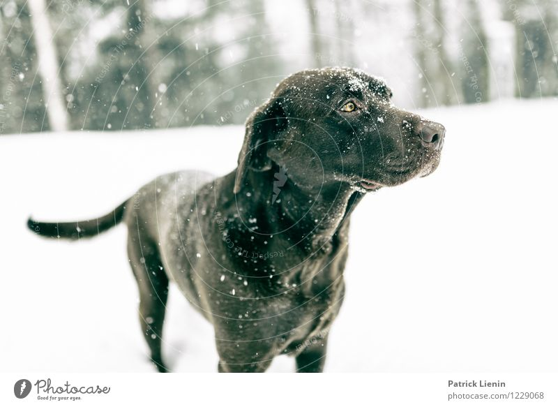 Dog Nature Beautiful Landscape Animal Winter Forest Mountain Environment Movement Snow Think Weather Leisure and hobbies To enjoy Uniqueness