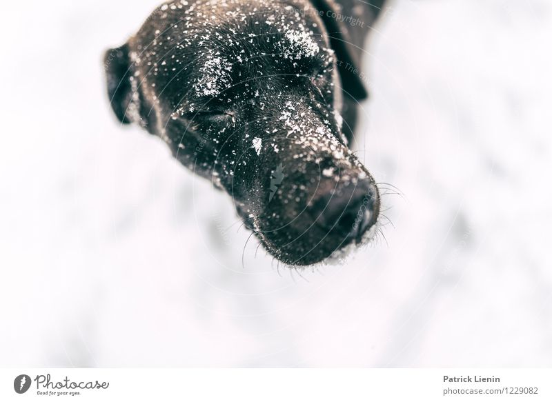 Dog Beautiful Relaxation Animal Winter Eyes Life Snow Playing Lifestyle Contentment Leisure and hobbies Elegant Nose Uniqueness Hope