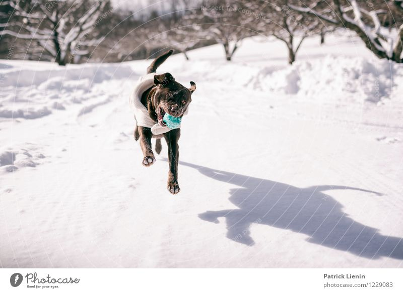 Dog Nature Landscape Animal Winter Environment Life Playing Happy Jump Contentment Leisure and hobbies Snowfall Trip Warm-heartedness Uniqueness