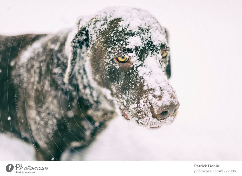 Dog Nature Beautiful Animal Winter Environment Snow Playing Leisure and hobbies Snowfall Weather Wait Observe Uniqueness Pet Animal face