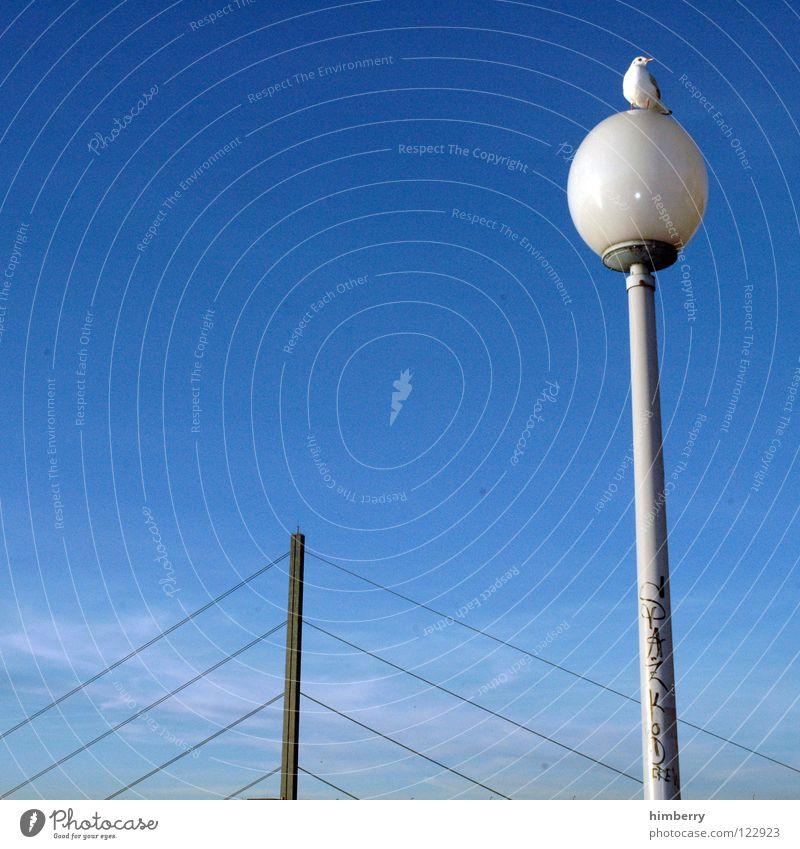 Sky Blue Animal Lamp Freedom Line Bird Architecture Flying Bridge Vantage point Lantern Traffic infrastructure Duesseldorf Street lighting