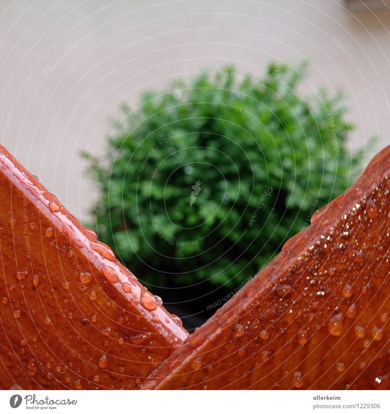 peephole Nature Drops of water Spring Summer Weather Bad weather Rain Plant Bushes Foliage plant Garden Fence Wet Brown Green Colour photo Exterior shot