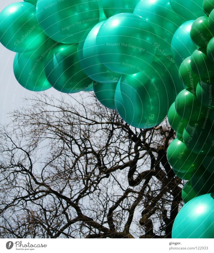 Green balloons vs. twigs Sky Blue Colour Bright green Dark green Headstrong Slate blue Branch Deserted Many Exterior shot Branchage Day Interconnected Large