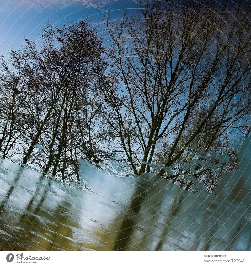 Water Sky Tree Blue Winter Cold Spring Lake Ice Brown Wet Branch Mirror Square Disgust