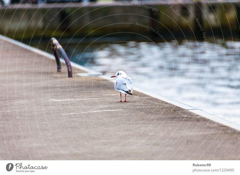 Loneliness Animal Bird Fear Wild animal Concrete Pain Steel Port City Humble