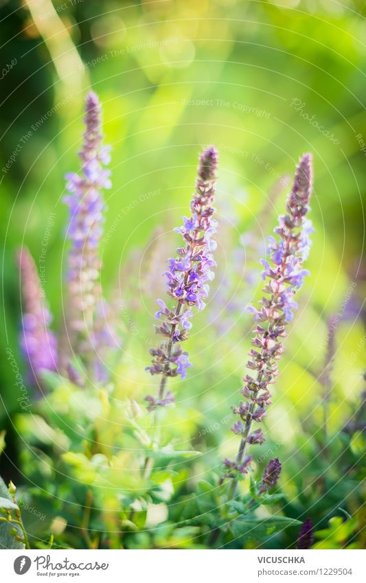 Nature Plant Summer Flower Leaf Life Blossom Autumn Background picture Garden Lifestyle Pink Park Leisure and hobbies Design Soft