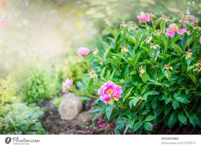 Nature Plant Summer Flower Leaf Yellow Spring Blossom Style Background picture Garden Lifestyle Pink Park Design Bushes