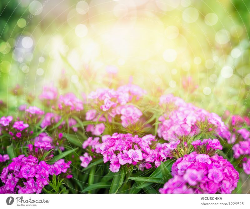 Nature Plant Summer Flower Leaf Spring Blossom Autumn Style Background picture Garden Pink Park Design Beautiful weather Symbols and metaphors