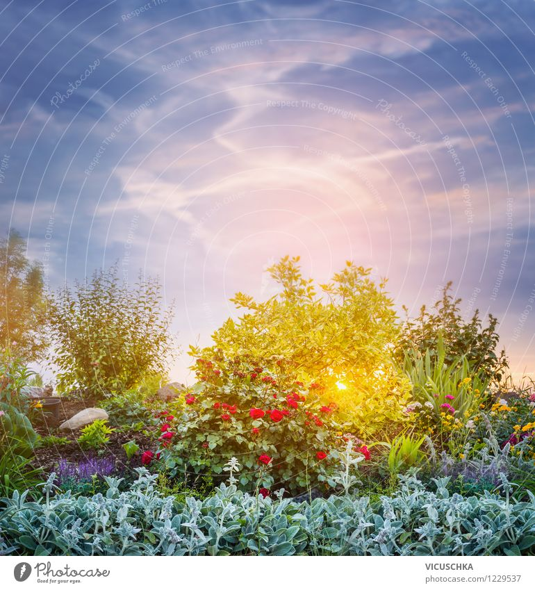 Sky Nature Plant Heaven Summer Flower Yellow Autumn Spring Background picture Garden Pink Design Park Bushes Beautiful weather