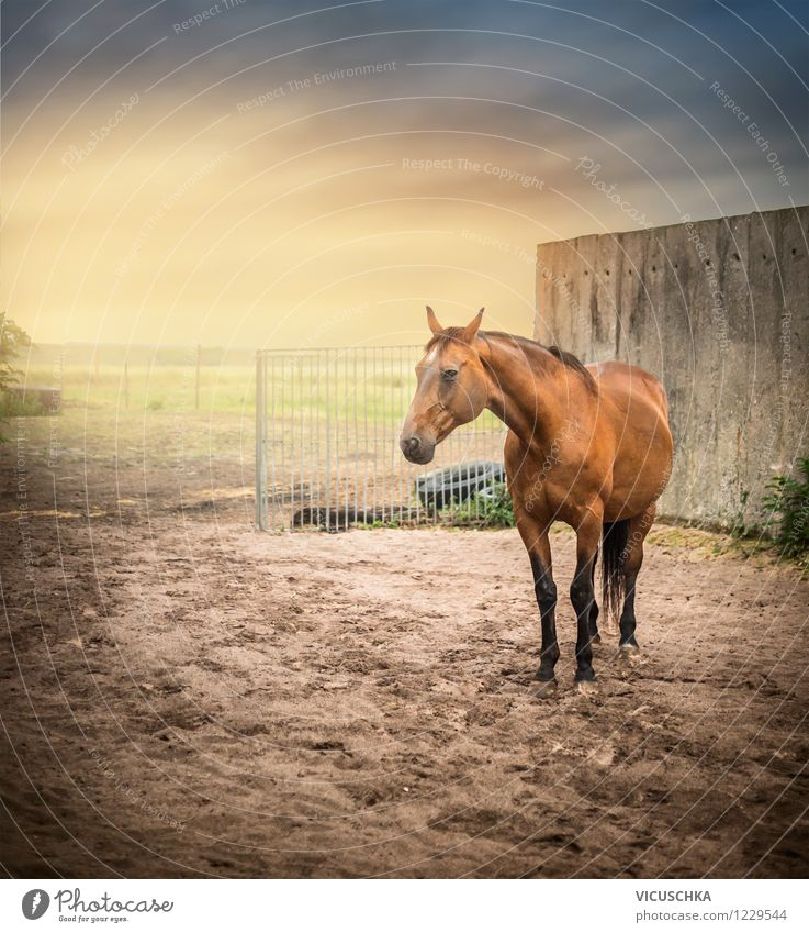 Sky Nature Summer Animal Wall (building) Spring Autumn Meadow Lifestyle Sand Design Field Free Beautiful weather Fence Horse