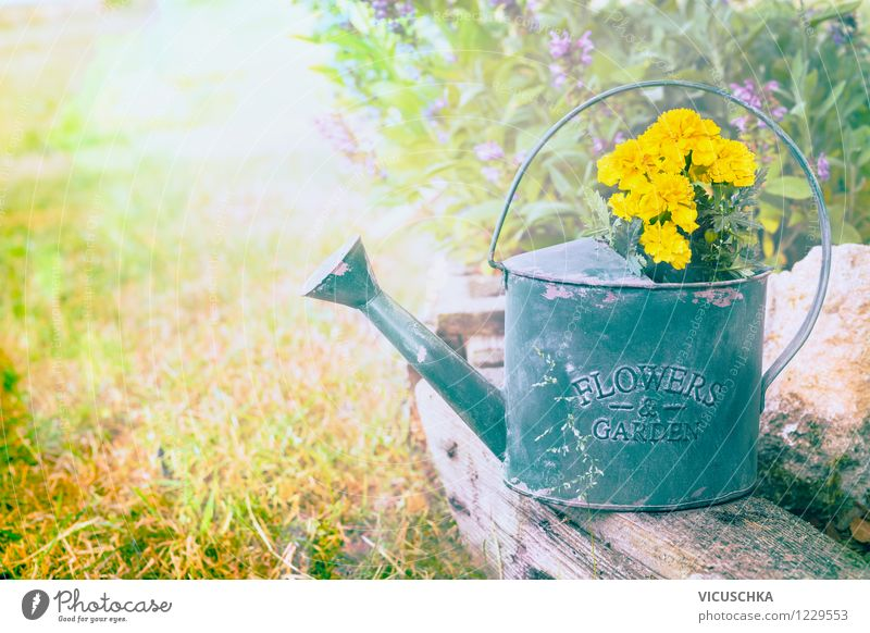 Old watering can with garden flowers Design Summer Dream house Garden Nature Plant Spring Autumn Beautiful weather Flower Leaf Blossom Bouquet Retro Yellow