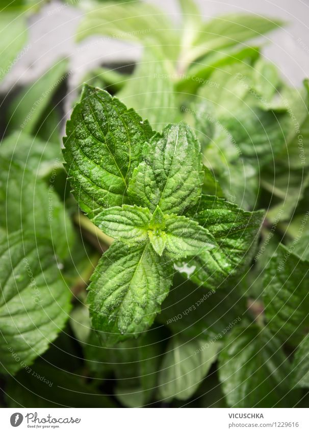 fresh mint Food Herbs and spices Organic produce Vegetarian diet Diet Style Design Alternative medicine Healthy Eating Life Garden Table Nature Plant Mint
