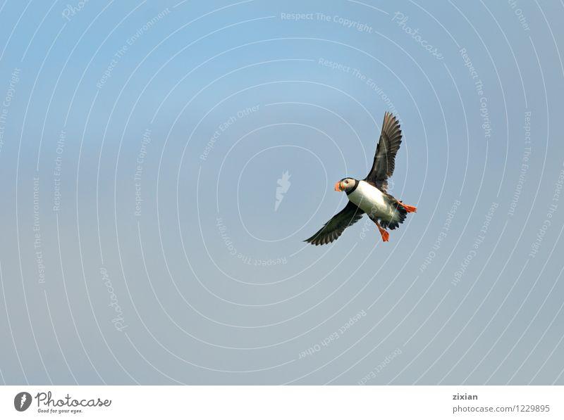Puffin Animal Bird Wild animal Free Happiness Telescope