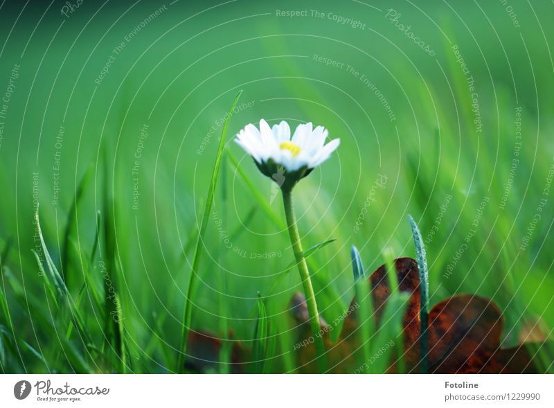 daisies Environment Nature Plant Flower Garden Meadow Bright Natural Green White Daisy Blossoming Colour photo Multicoloured Exterior shot Close-up Day Light