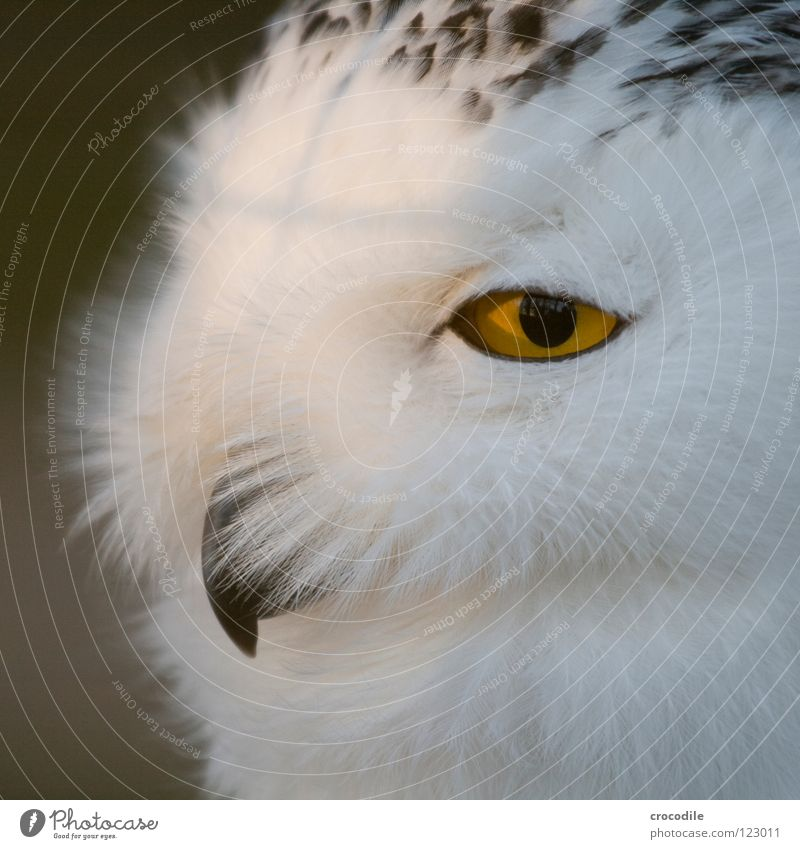 Animal Eyes Bird Feather Soft Living thing Animal face Zoo Beak Motionless Pupil Downy feather Bird's head