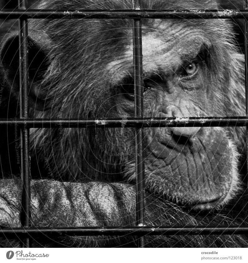 Animal Hair and hairstyles Sadness Mouth Trip Nose Grief Ear Pelt Zoo Distress Black & white photo Captured Grating Forehead Jail sentence