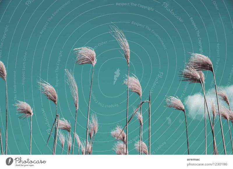 wind chimes Nature Plant Sky Summer Grass Garden Field Turquoise Calm Biomass Subdued colour Exterior shot Deserted Copy Space top Day