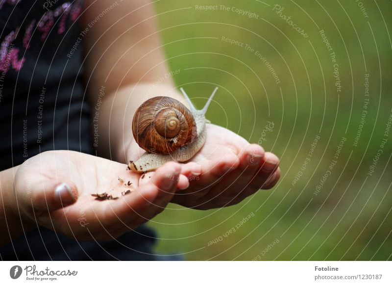 Human being Child Nature Hand Animal Environment Natural Bright Infancy Fingers Near To hold on Crawl Snail Protect Slimy
