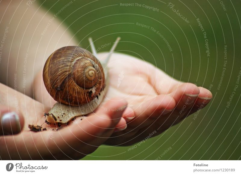 snail study Human being Child Hand Fingers Environment Nature Animal Snail 1 Bright Small Near Natural Vineyard snail Large garden snail shell Crawl Feeler