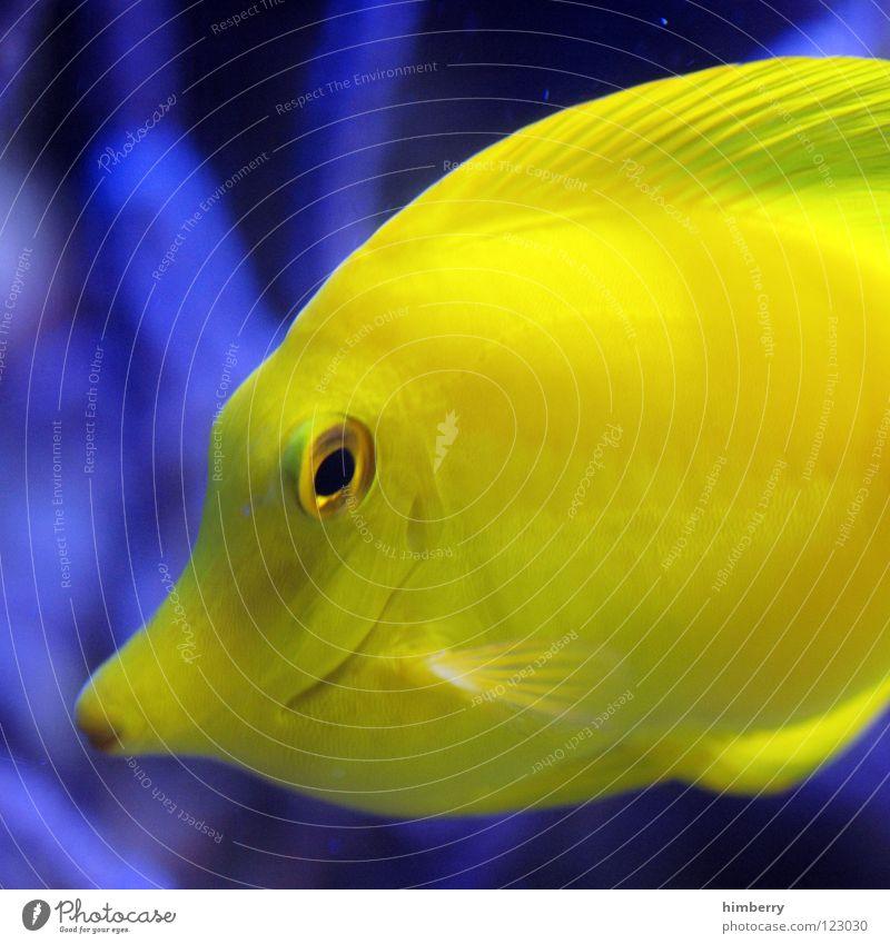 Water Plant Ocean Fish Dive Zoo Virgin forest Cuba Exotic Aquarium Coral Bahamas