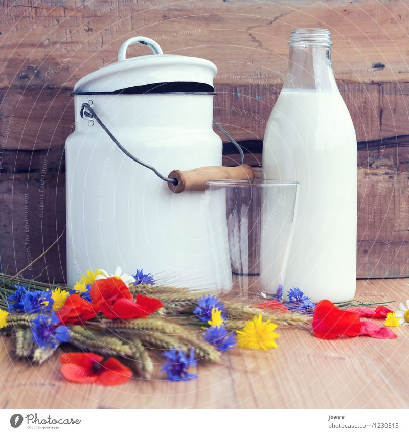 For milk bubis + -girls Breakfast Milk Glass Flower Wood Fresh Healthy Brown Multicoloured White Frosted glass Milk churn Milk bottle Jug Rustic Old fashioned