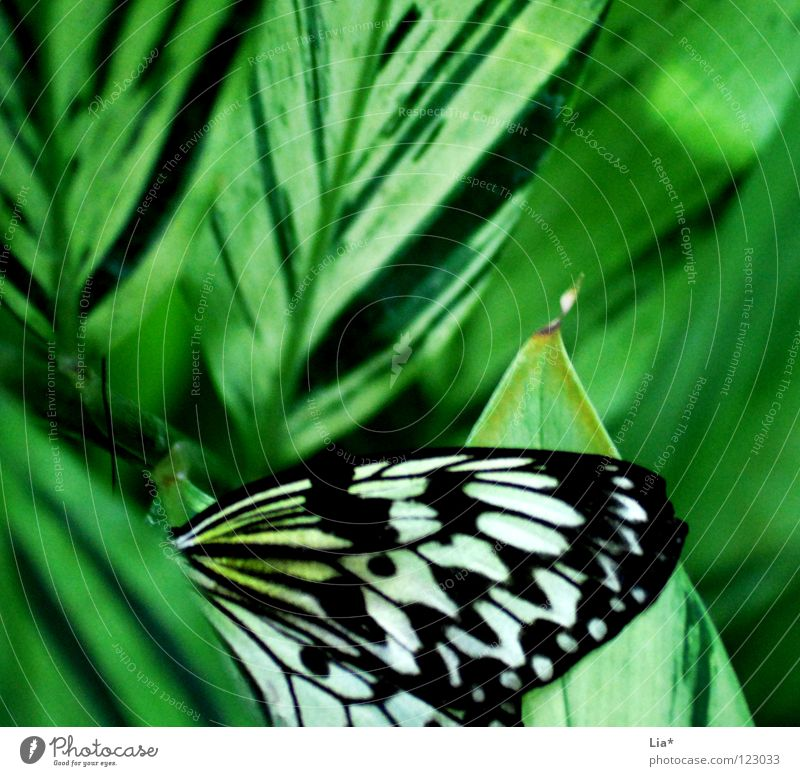 pamphlet Beautiful Nature Butterfly Wing Stripe Sit Soft Green Black White Easy Fine Insect Hiding place Hide Point Close-up Detail Macro (Extreme close-up)