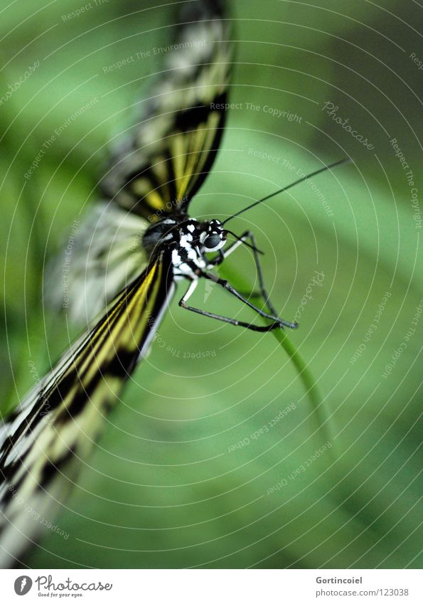 Nature White Green Beautiful Joy Flower Black Eyes Animal Yellow Colour Legs Elegant Flying Sit