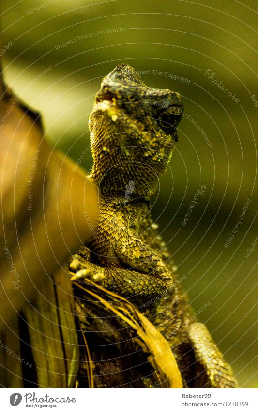 Lizard watching you Zoo Bushes Saurians 1 Animal Wood Observe Wait Green Colour photo Interior shot Day Blur Upper body Looking