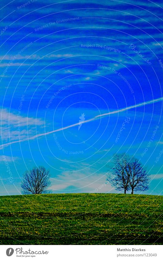 Sky Nature Blue Tree Clouds Environment Meadow Spring 2 Field Ground Floor covering Pasture Americas Destruction Rural