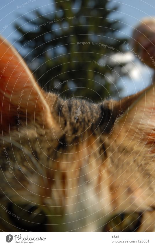Valentine for Froggy Animal Cat Domestic cat Feed Barn fowl Watchfulness Testing & Control Hunter Hunting Warped Fear Playing Macro (Extreme close-up) Close-up